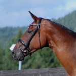 H.St.B Lorena - Lauries Crusador xx - World Cup I by Caflin AB