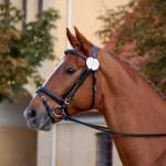 Sir Dee - Sir Donnerhall  by Caflin AB